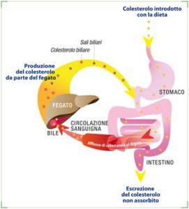 Colesterolo, cura e prevenzione